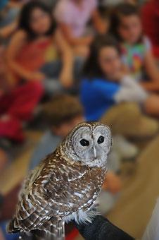 Eyes On Owls - Live Owl Programs